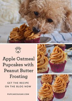 """What started off as a dream has grown into a variety of pupcake flavors. Each pupcake recipe is made with love and a story, or shall I say """"pup-tale."""" This pupcake is Sugar tested, and Sugar approve Dog Cake Recipes, Dog Biscuit Recipes, Dog Treat Recipes, Dog Food Recipes, Dog Safe Cake Recipe, Cake Dog, Puppy Cake, Dog Cakes, Diy Dog Treats"""