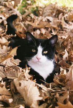 Gato de otoño