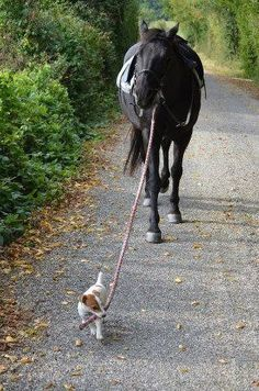"Little Dog says to The Horse, whose named is: ""Beaumont.""  ~  ""Will you walk a little faster please 'Beaumont?'   We are already running late!"""