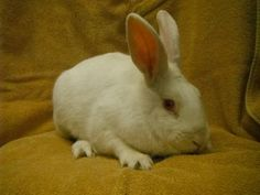 good thing the only rabbit listed right now at the MN humane society looks like the evil one from monty python.  #creepy