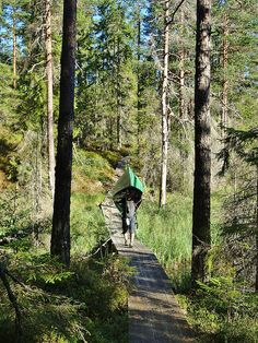 The Lelången Loop – a walk in the Swedish woods with canoes