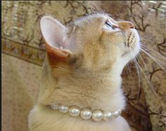 Cat wearing Shabby Chic Pearls.