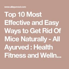 Top 10 Most Effective and Easy Ways to Get Rid Of Mice Naturally - All Ayurved : Health Fitness and Wellness | AMP HTML Blogger Template