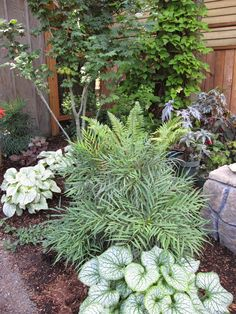 Strategy, secrets, and also overview in the interest of acquiring the most ideal end result and creating the maximum utilization of Front of House Landscape Ideas Garden Shrubs, Landscaping Plants, Shade Garden, Garden Beds, Landscaping Ideas, Tall Shade Plants, Soft Caress Mahonia, Portland Garden, Bee Friendly Plants