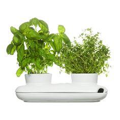 Herb Pot Duo | dotandbo.com
