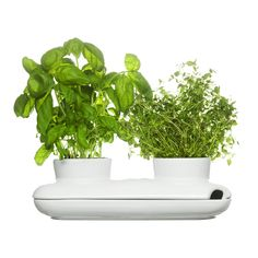 Herbs are fun to grow in your kitchen, but they require SO much water! Here is a cool way to keep your herbs fresh and thriving at home.