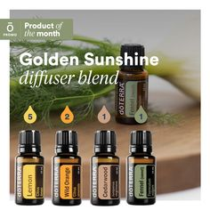 Fennel Essential Oil, Essential Oils 101, Essential Oil Candles, Essential Oil Diffuser Blends, Doterra Diffuser, Doterra Oils, Doterra Blends, Foeniculum Vulgare, Patchouli Oil