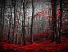 Fototapete schwarz weiß wald  Fototapete Wald Schwarz Weiß Avalon 366 x 254cm (Art.115 ...