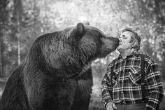 Rakkaus (rakkaus is Finnish and means 'love' in English) Black Bear, Brown Bear, Meanwhile In Finland, Cool Photoshop, People Of Interest, Great White Shark, Bear Men, Closer To Nature, Animals Of The World