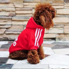 Dog Soft Cotton Hoodies in 7 Colour - All Sizes