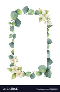 Watercolor vector frame with green eucalyptus leaves, Jasmine flowers and branches. Spring or summer flowers for invitation, wedding or greeting cards. Flower Backgrounds, Wallpaper Backgrounds, Iphone Wallpaper, Spring Wedding Flowers, Summer Flowers, Illustration Blume, Illustration Flower, Leaves Vector, Eucalyptus Leaves