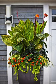 No-Fail Tropical Container Garden Combinations With lavish, oversized foliage and vivid blooms, cannas such as the top plant here, provide vertical sizzle in gardens and large containers. Tropical Landscaping, Tropical Garden, Tropical Plants, Backyard Landscaping, Tropical Flowers, Plants Sunny, Backyard Patio, Landscaping Ideas, Full Sun Container Plants