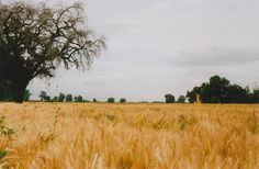 i wanna run through a beautiful country field with my red sun dress