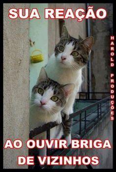 278 Melhores Imagens De Humor Animais Frases Funny Animals Pets E