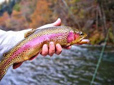 Fly Fishing Watauga River