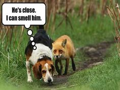 I will find that fox...Never you fear. http://www.bestfunnyjoke...