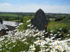 St Menefreda Church,St. Minver,Rock,Cornwall