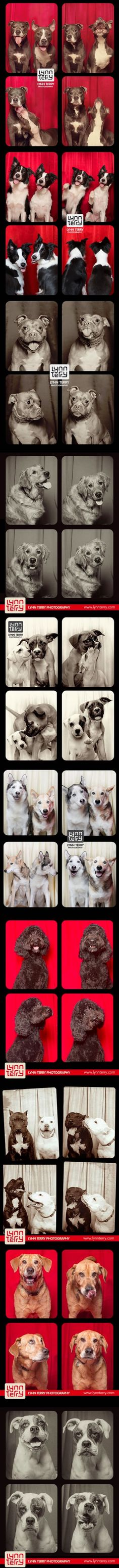 Photo booth for dogs