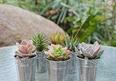 top-30-lembrancinhas-de-casamento-san-pedro-cactus (2)