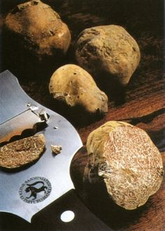 White truffle from Alba