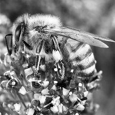 Včely podľa výskumov dokážu kategorizovať objekty, rozumieť príkladom či rozlišovať tvary. #genius #vcela #smart #apiterapia #nature #krasa