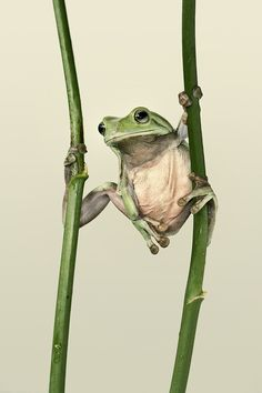 ~~Tai Chi Master ~ frog by Lessy Sebastian~~
