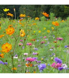 jach re fleurie pour le jardin nomm e hirondelle m lange de graines de fleurs pour fleurir. Black Bedroom Furniture Sets. Home Design Ideas