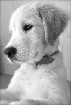 Cooper <3