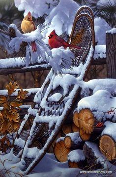 Jerry Gadamus Lacy Red   WildlifePrints.com