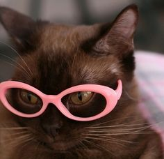 CAT EYES: 25 Cats Wearing Glasses http://www.haveheartdaily.com