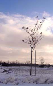 Petit arbre, ciel bleu, hiver
