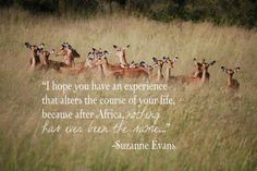 Discover and share South African Quotes. Explore our collection of motivational and famous quotes by authors you know and love. Kenya, Tanzania, African Love, African Safari, Africa Quotes, Quotes About Africa, Epic Quotes, Inspirational Quotes, African Proverb