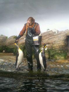 Pinguins worden gevoerd