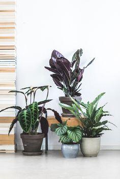 Nieuw seizoen, mooie plannen, groene planten
