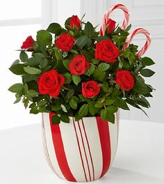 Candy Cane Christmas Mini Rose - 4.5-inch