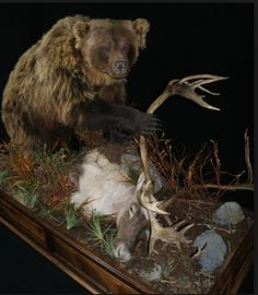 Full body bear mount ideas black bear full body mount 4 for Ebensburg hunting and fishing