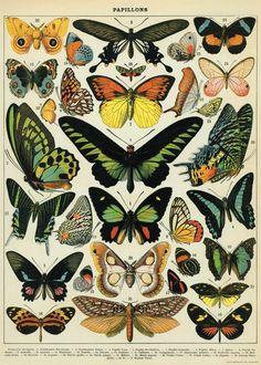 Amazon.com: Cavallini & Co. Butterflies Decorative Decoupage Poster Wrapping Paper Sheet