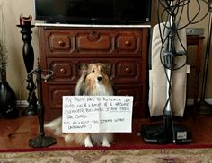 """""""My Mom has to replace the cord on a lamp and a vacuum cleaner because I ate thru the cords.  P.S. At least the items were unplugged. :) ~ Dog Shaming shame - Collie"""