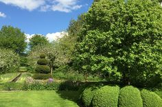 Mature box hedging and topiary planting