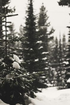 Something about the forest in the winter that makes my heart happy :)