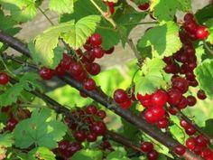 Fruits And Veggies, November, Garden, Cottage, Food, Syrup, Fruits And Vegetables, November Born, Garten