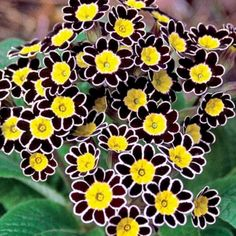 Adorable Beautiful Fall Flowers To Plant In Your Garden: 78+ Best Fall Flower Ideas https://decoor.net/beautiful-fall-flowers-to-plant-in-your-garden-78-best-fall-flower-ideas-6349/