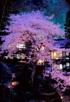 Cherry Blossom Bluff