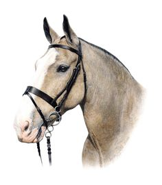 Horse drawing - Aron Gadd - colored pencil this seriously looked like a photograph. ...... wow!!