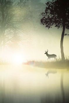 Deer in the morning mist