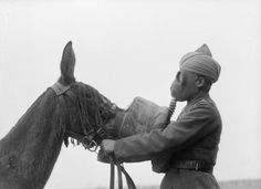  W S S S RSCH N    neo-catharsis:   Gas mask being fitted to a mule...