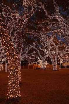 A most glorious how-to (pinned with a little bit of envy): How to wrap led christmas lights on the outdoor trees. What does your Christmas look like? Noel Christmas, Winter Christmas, Christmas Ideas, Diy Christmas Light Show, Christmas Garden, Pallet Christmas, Thanksgiving Holiday, Christmas Images, Christmas Signs
