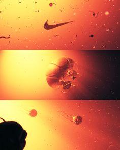 Nike SEED by Bao Nguyen, via Behance