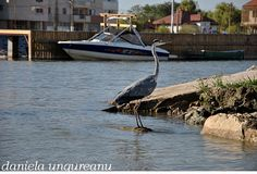 sfantu gheorghe 4 Romania, Travel Destinations, Boat, Destinations, Boats