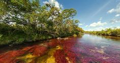 Río Caño Cristales-Colombia Beautiful Landscapes, 1, Adventure, Country, World, Outdoor, Rivers, Beaches, India